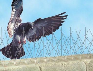 شوك طرد الطيور راس الخيمة
