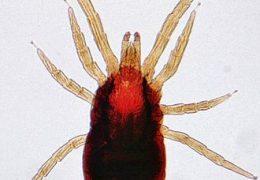 حشرة العتة من الحشرات التي تفسد الملابس