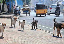 الكلاب من أكثر الحيوانات التي تنشر الحشرات
