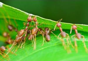 اسرار ومعلومات عن النمل