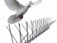 طرد الطيور بسبب الحشرات التي تجلبها الطيور
