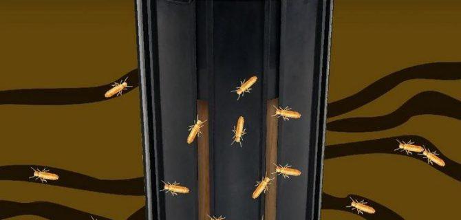 شكل مصيدة النمل الأبيض