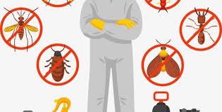 شركة إبادة حشرات في الساحل