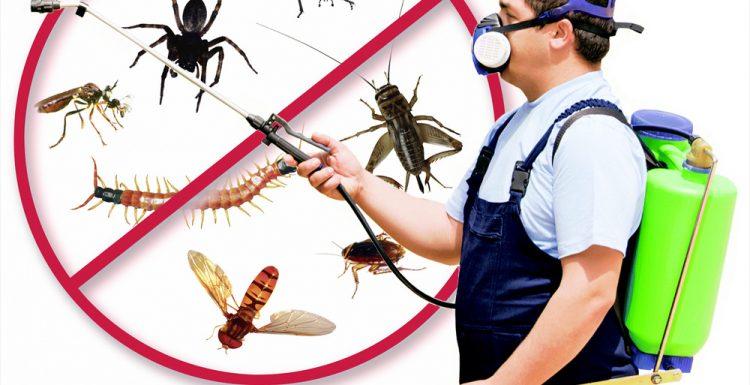 شركة إبادة حشرات في مدينة نصر