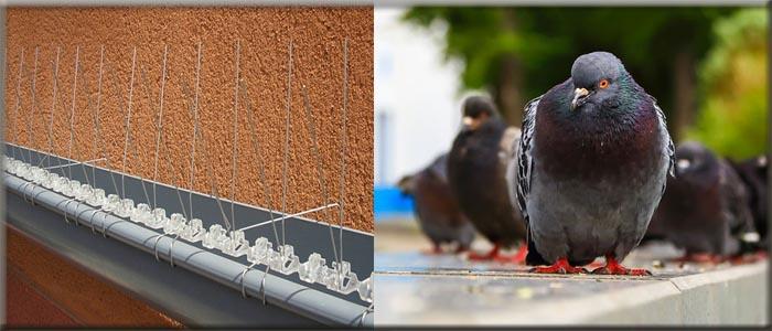 افضل جهاز طارد طيور في مصر
