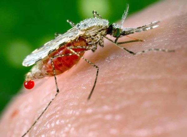 التخلص حشرة البعوض