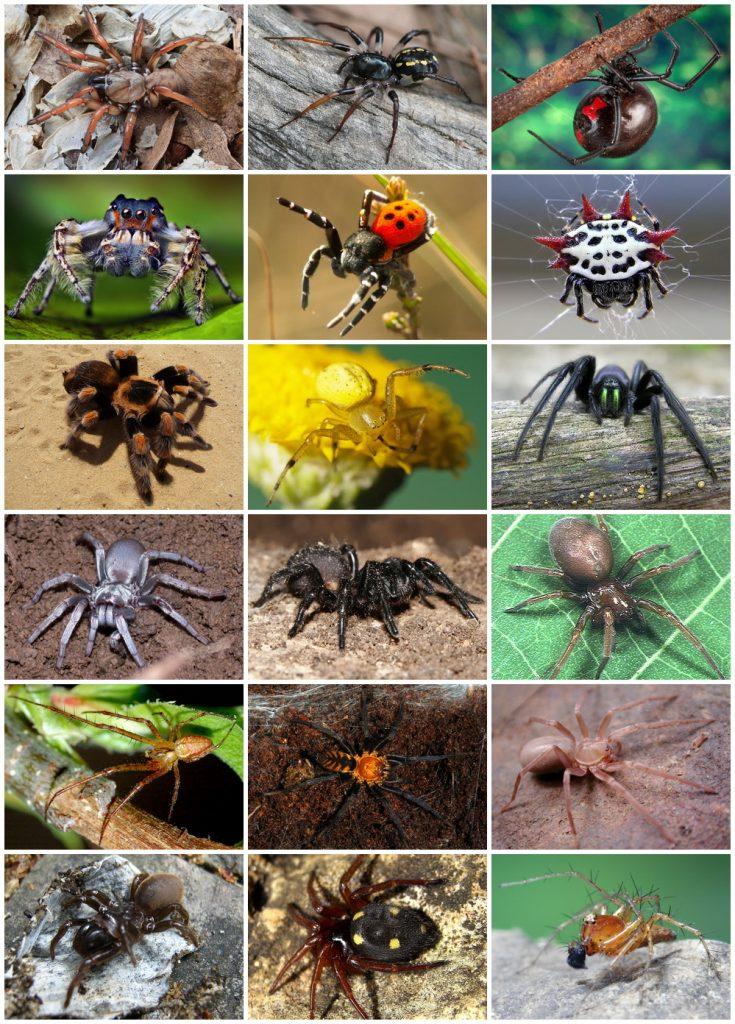 التخلص من حشرة العنكبوت