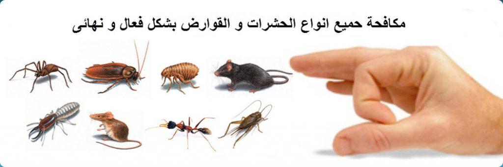 شركات رش الحشرات بالقاهرة