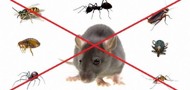 شركة مكافحة حشرات بمصر