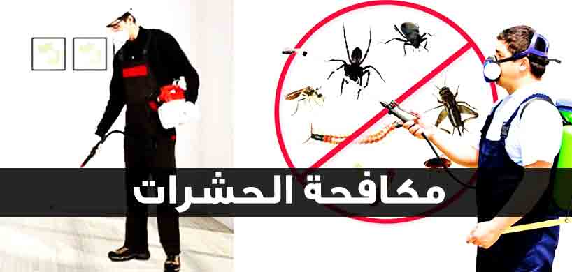 شركة مكافحة حشرات في مدينة نصر