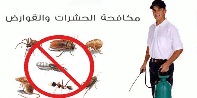 شركة إبادة الحشرات