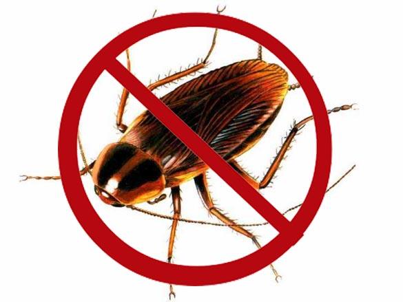 مبيدات الصراصير