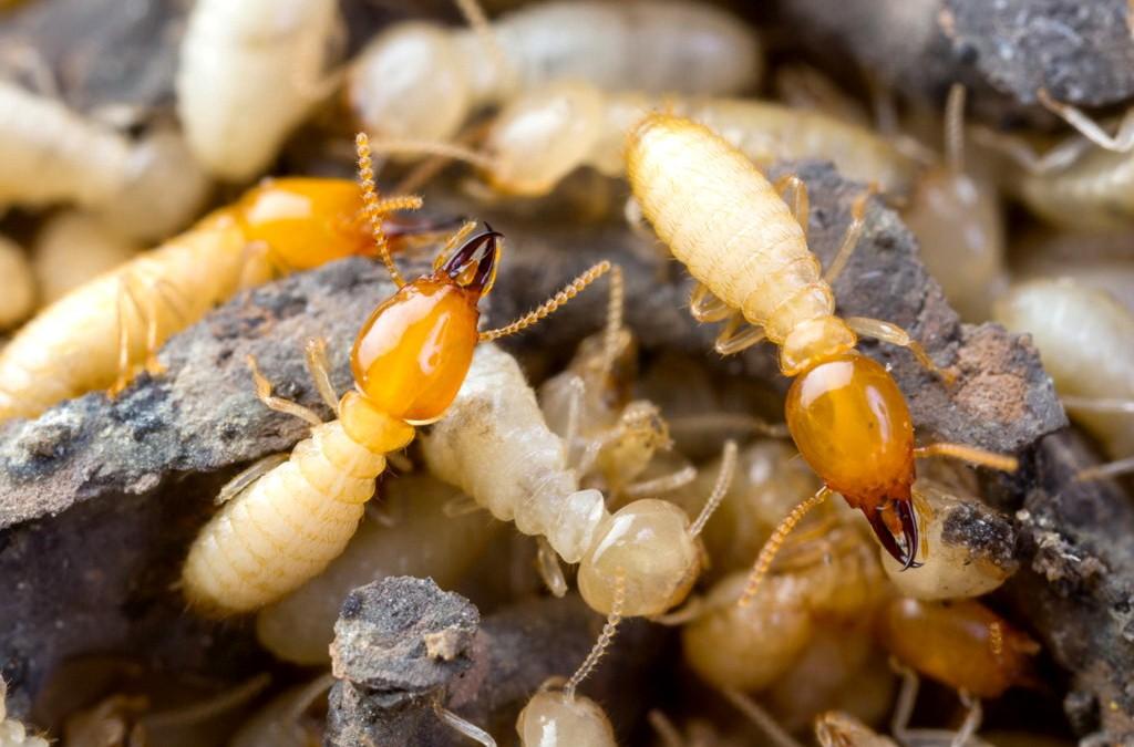 مبيدات النمل